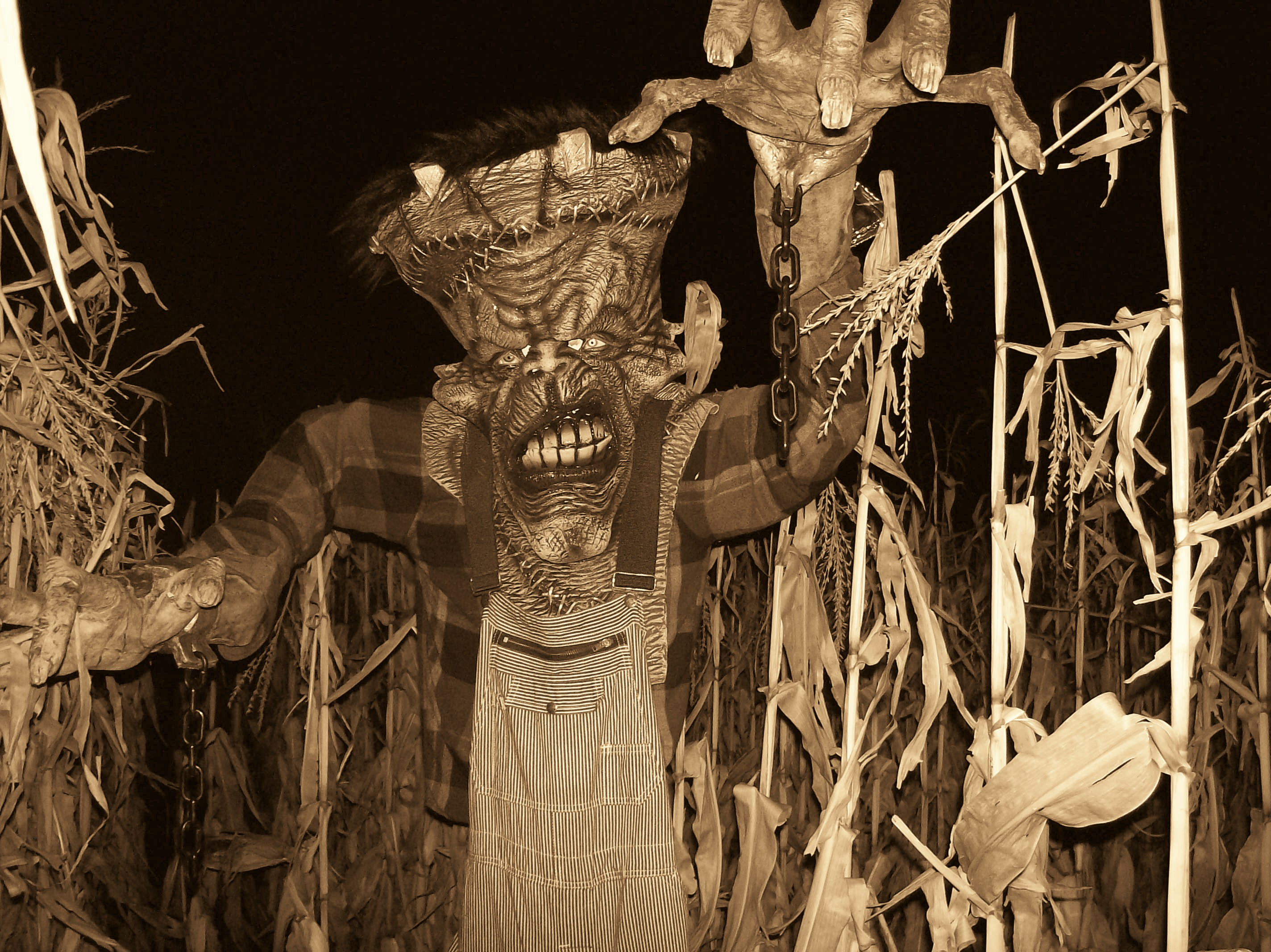 spooky stalks milwaukees only haunted cornfield about us and news - Halloween Corn Stalks